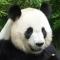 avatar de PandaMan