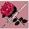 avatar de RoseOfMay